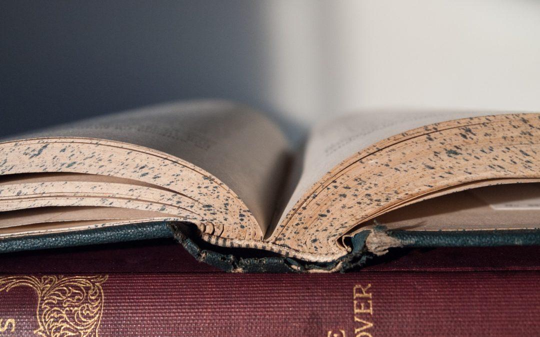 """Buchempfehlung: """"Die Ameisen"""" – Bernard Werber"""